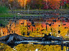 Swamp reflections.