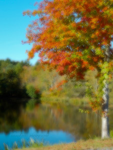 I love this time of year! It makes the simplest of things feel so indulgent, like driving down a road you've driven on hundreds of times.  Vaughn Street Lakeville, Ma
