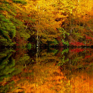 Thompson Street  Middleboro, Ma  This is a sunrise shot from a tiny little bog-feeding pond out in the woods. The sun had just risen and was illuminating only the tree tops. I LOVE FALL!! For those of you thinking I broke the rule of thirds, I do that often, on purpose. Having more or a less a math brain, this is visually more interesting to me. I enjoy symmetry which is why I'm drawn to reflections. And after all, there are no rules when you make your own! Happy Friday!!!