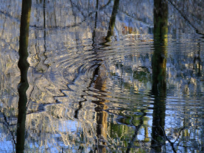 The quest for color continues.... I found this colorful little reflective swamp with snow still on the trees. This is a shot of just the water, with my favorite thing to photograph~ripples! I want to thank all of you who have been so generous with your time and comments lately. I guess I'm doing something right as so many of you seem to really dig what I put up here.  Have a great day!!