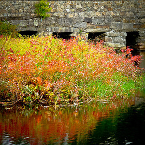 Oliver Mills, Middleboro Ma Sept 28 2012  I'm in school again and find that I like to take my studying outside. I have a hard time reading indoors as I get sleepy so fast. I have a few favorite places to go, this being one of the busier locations but, the foliage here is so pretty this week. The smaller vegetation at the edges of fields and water are really starting to light up nicely.